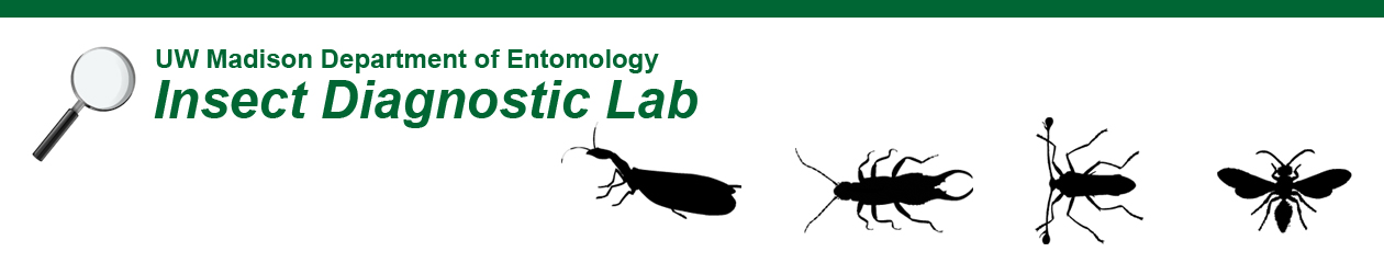 Insect Diagnostic Lab