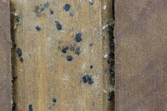 Bed Bug Signs_opt