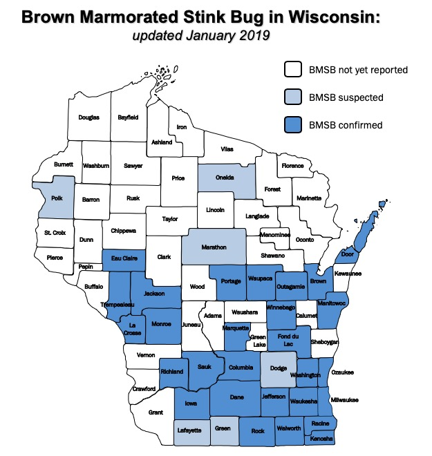 Distribution of the brown marmorated stink bug in Wisconsin—updated January 4th, 2019